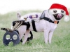 dog by phiberoptik